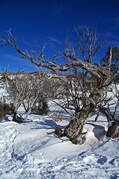 example of snow landscape taken in portrait format