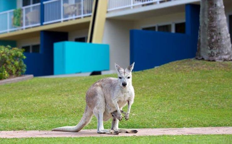 telephoto lens used to take image of kangaroo