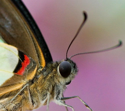 Butterfly macro photograph