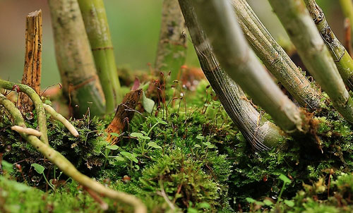 macro photograph tips - image of moss found at the bottom of a plant