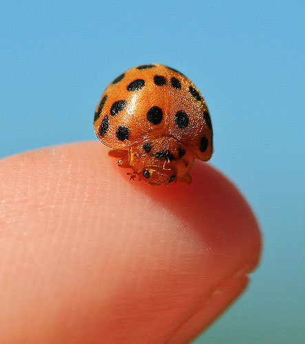 macro photography tips - ladybird photograph