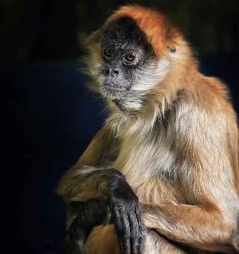 zoo photography - monkey