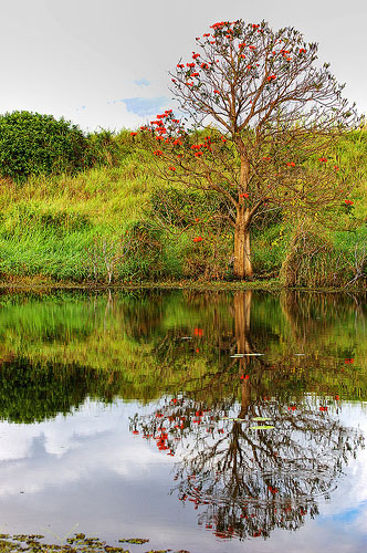 HDR Midweek Reflections