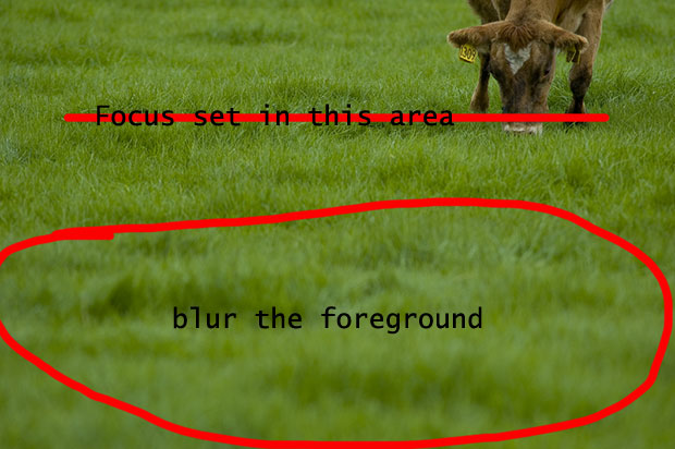 where to focus to blur foreground