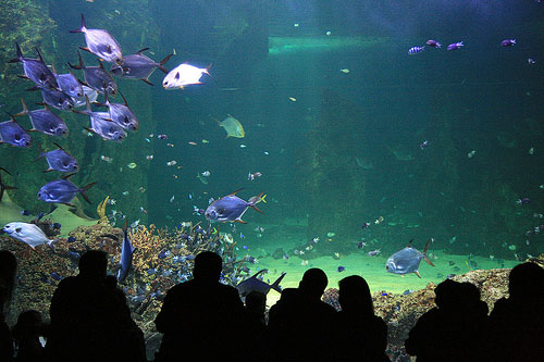 aquarium photograph