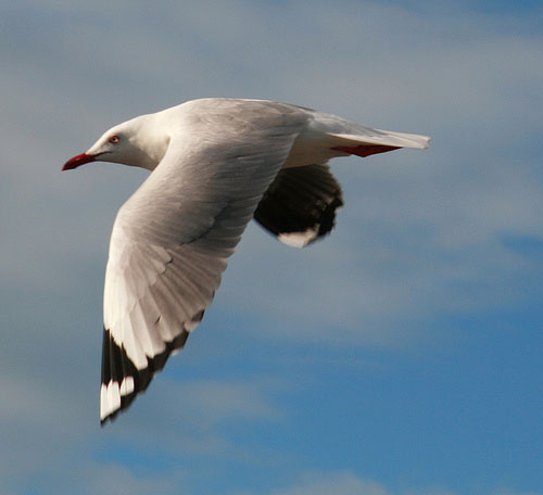 Photograph flying birds example 1.