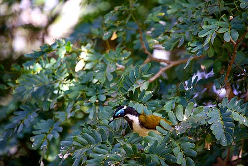 bird in tree picture