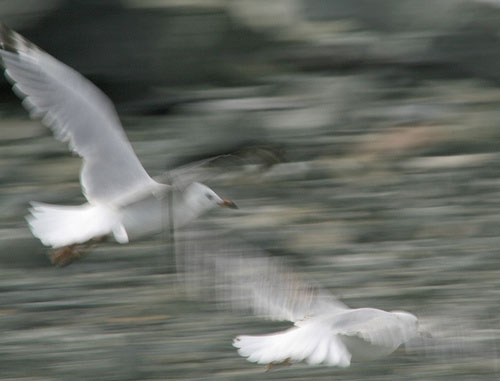 Photograph flying birds example with slower shutter speed