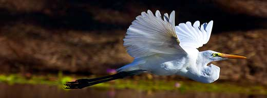 Bird Photography. Flying bird image
