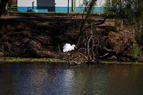 photograph animals. original image crop