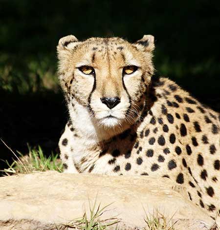 photo of zoo animal