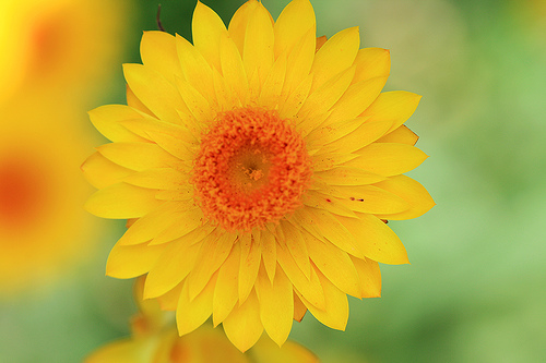 photograph vivid colors example of yellow flower