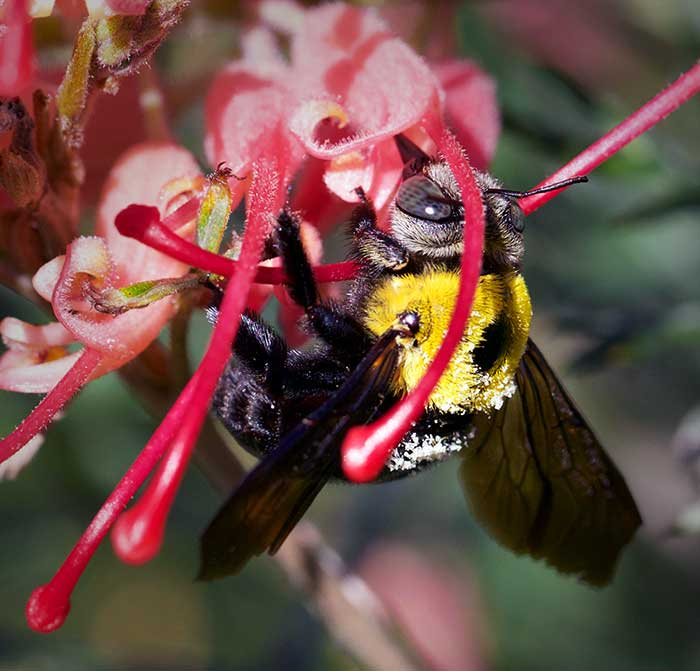 Flowers attract bees to garden