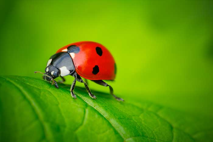 Learn essential tips for shooting ladybugs