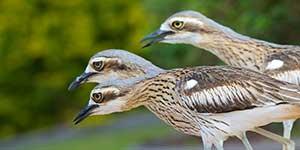 Bird Photography for Beginners