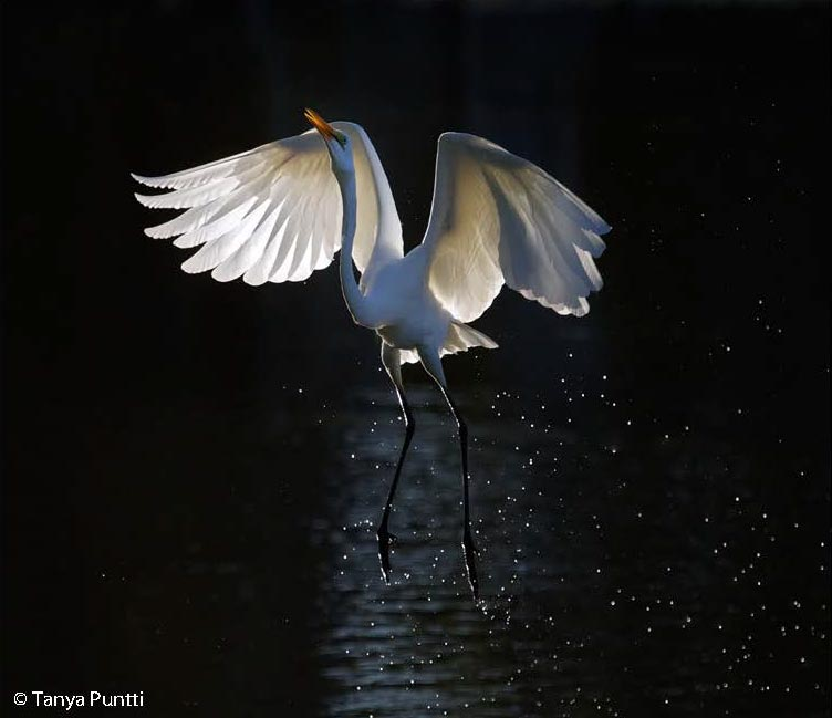 Wildlife photography with backlight.