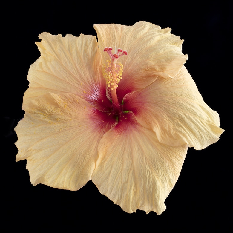 Garden photography hibiscus flower