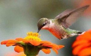 Hummingbird garden photography