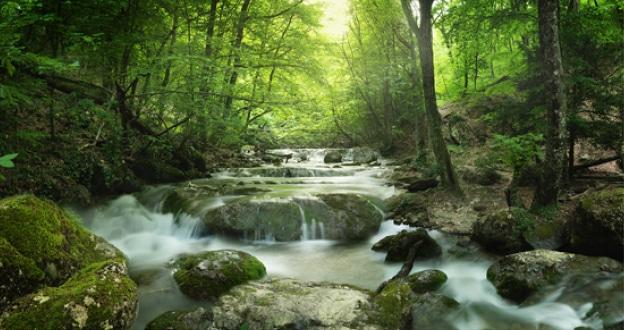 Slow water in a creek